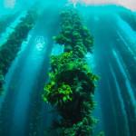 Algen – die Alleskönner